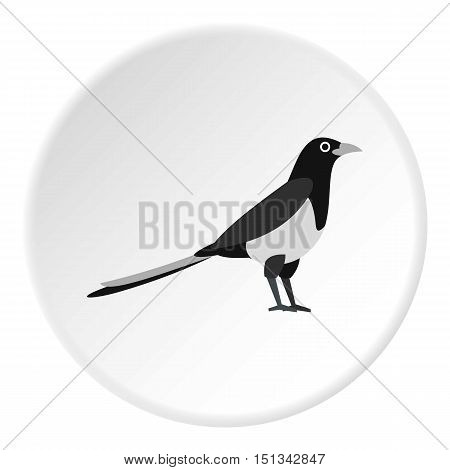 Magpie icon. Flat illustration of magpie vector icon for web design
