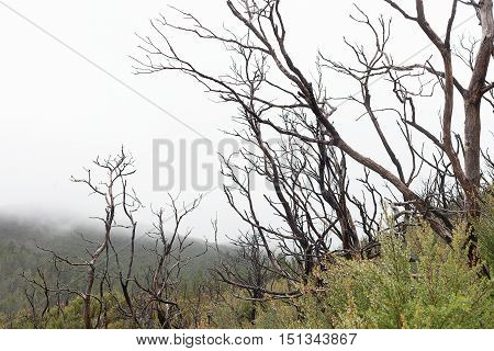 Bushfire Damaged Trees