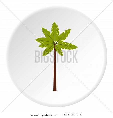 Palm woody plant icon. Flat illustration of palm woody plant vector icon for web