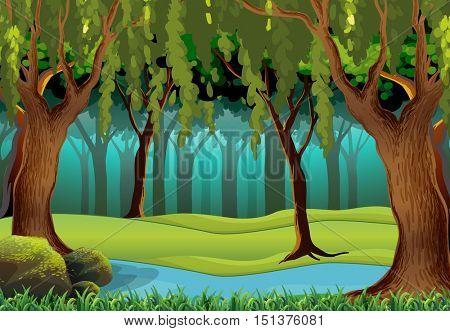 Natural stream in forest scene