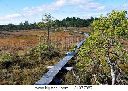 Wooden path on bog with autumn colors.