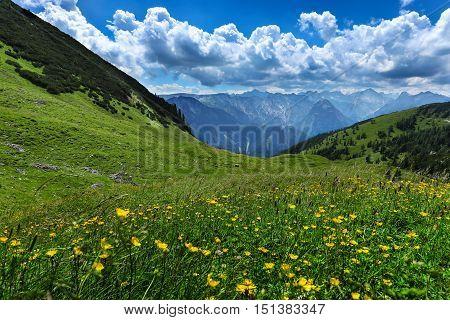 Alpine meadow flowers summer mountain landscape. Austria Tirol Achensee Area.