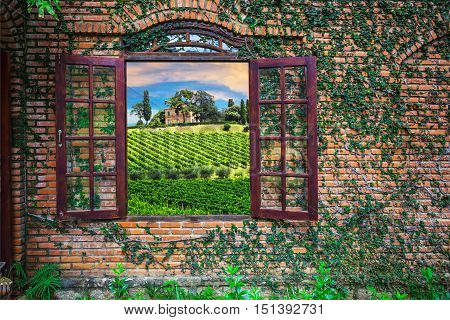 View Of The Italian Vineyards