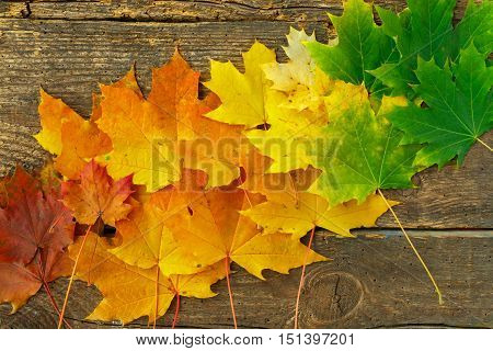 Red yellow and green maple leaves on old wooden background; Autumnal motif