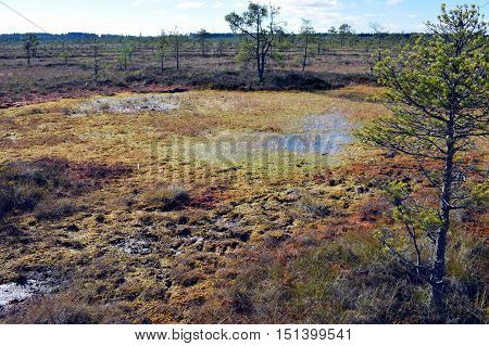 Wet peat on a bog. Torronsuo National Park, Finland