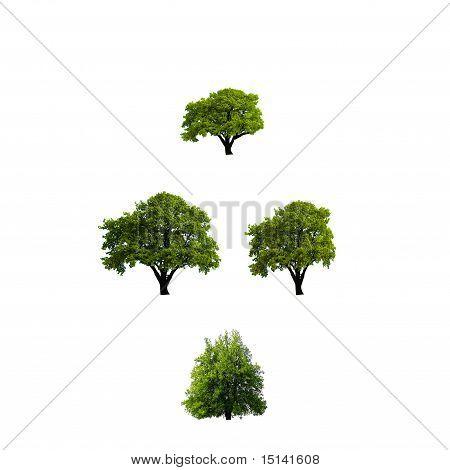 Árbol aislado verde sobre fondo blanco
