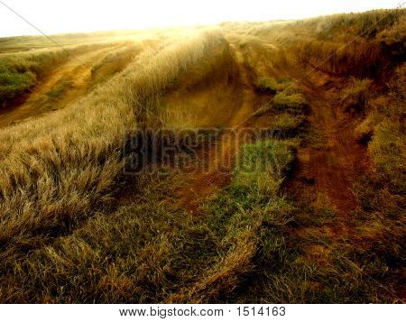 Tracks On A Sunlit Plain