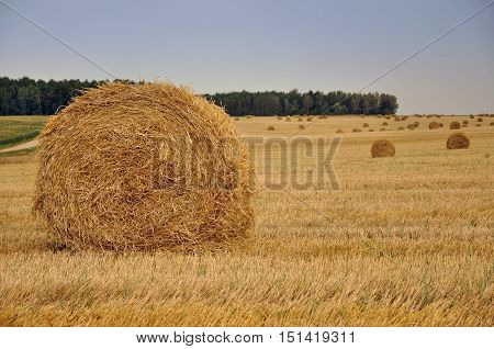 Round yellow haystacks on dry sloping field in perspective. August harvest. Selective focus.