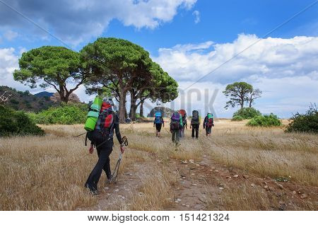 Tourists with large backpacks are on the withered grass in the park under the pines