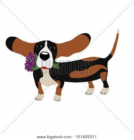 dog Basset Hound with a bouquet of irises isolated on white background