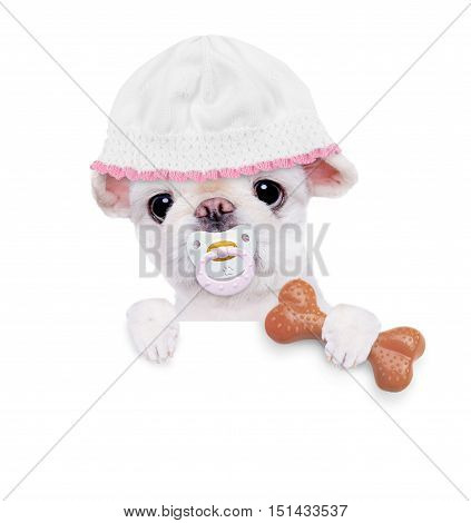 Cute little puppy holds a toy for dogs, behind the white banner.