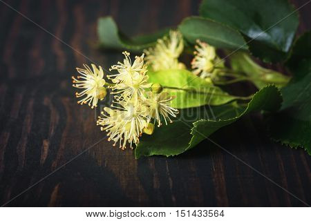 Flowers and leaves of linden closeup on a wooden background