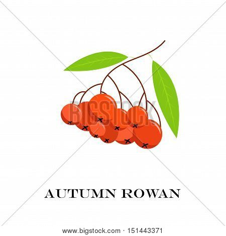 Vector Illustration Of Branch With Outline Rowan Or -berry.