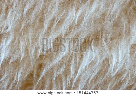 Beige long fur; wool natural background; puffy texture