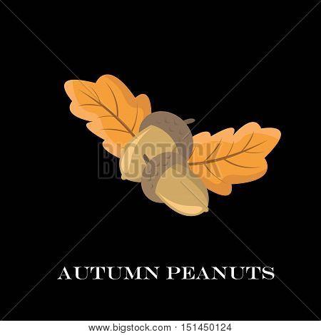 Autumn Peanuts On Black Background. Vector Illustration.