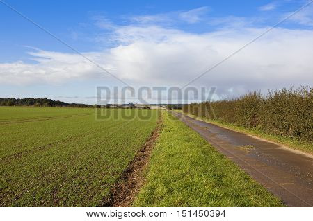 Bridleway And Young Wheat