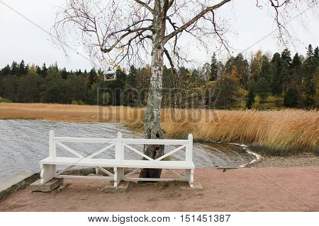 White wooden bench, tree with bird feeder on the lake shore at the outdoor national park. Autumn fall beautiful green forest landscape nature background . Calm, quiet, peaceful scene, recreation, relaxation, walk concept