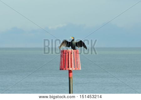 Cormorant on red marker post with wings spread in sun