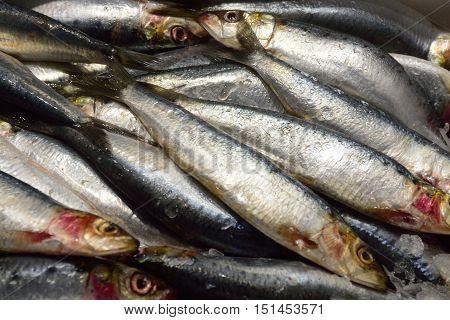 Group of Sardines on sale on market stall