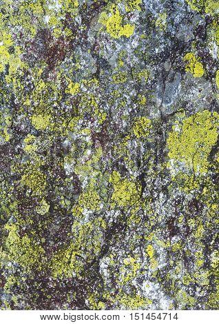Stone With Lichen (background).