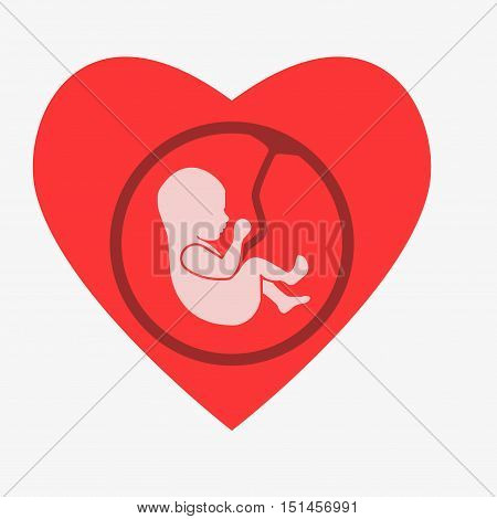 Embryo Phase Of Born