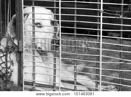 dog in a cage looking sad black and white