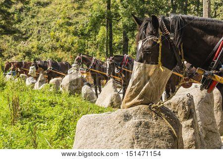 Feeding Horses At A Standstill.