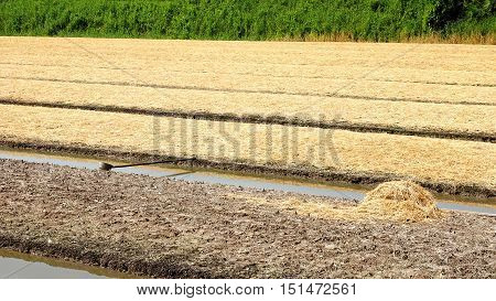 Preparing the soil and straw to cover. Wait to sow seeds gardening growing vegetables.