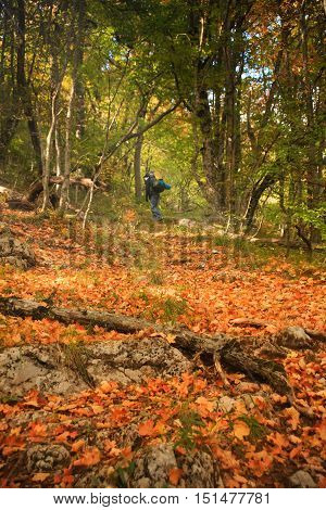 Autumn forest with orange and yellow leaves on the ground and figure of outgoing person with backpack at the background