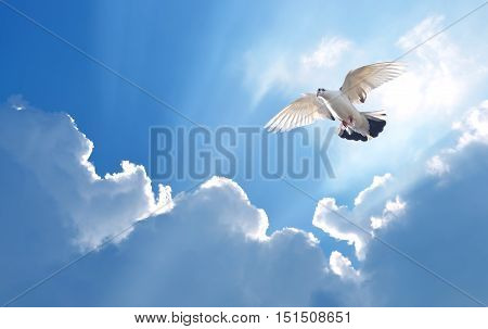 Holy Spirit dove in blue sky bright light shines from heaven