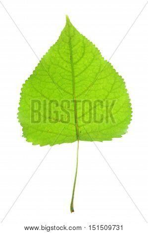 close up on single green leaf with leaf vein texture