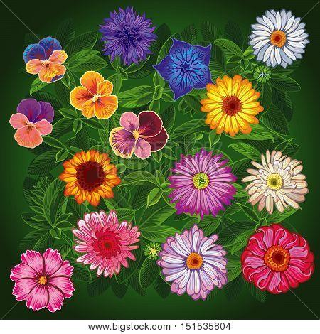Set summer wildflowers. Top view. Floaral Vector