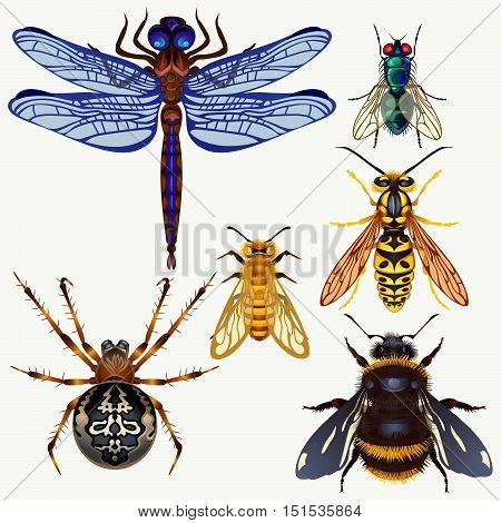 Set of insects. Top view. Vector insects fly, bumble bee, wasp, spider, dragonfly