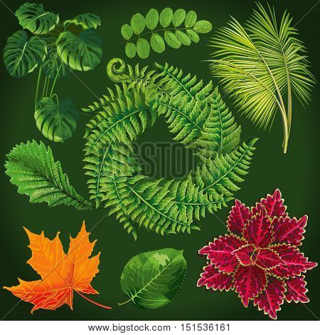 Vector set leaves. Collection green tree leaves. Natural green leafs set. Leafs set element floral color garden art. Natural green set leaves. Flat leafs.