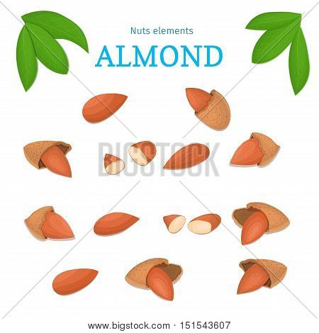 Vector set of nuts. Almond nut fruit, whole, peeled, piece of half, walnut in shell, leaves. Collection of walnut nuts designer elements for use in packaging design projects flyer healthy eating