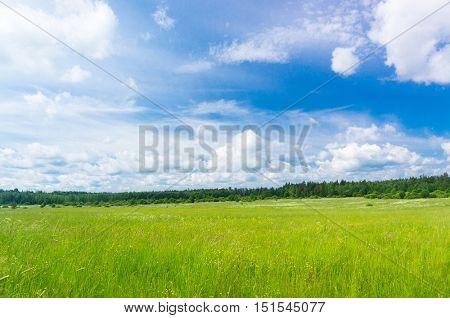 Nobody Outside Grass Lawn