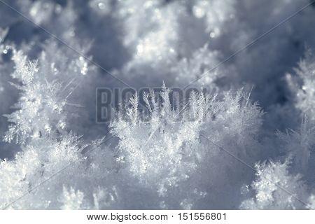 Big snow crystals on the ground, macro shot