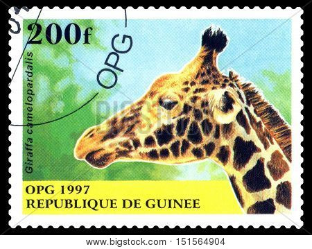 STAVROPOL RUSSIA - October 12 2016: a stamp printed in Guinea (Republique de Guinee) shows Giraffe camelopardalis circa 1997.