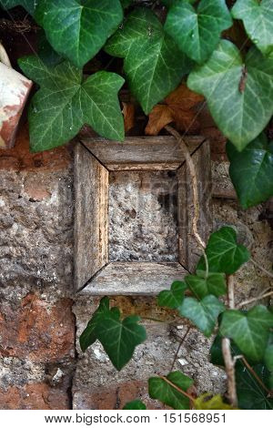 Green Ivy Leaves And Vintage Wooden Frame