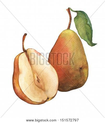 Composition whole fresh pears and pear sliced in half, showing the pulp and seeds inside. Watercolor hand painting illustration on isolate white background.