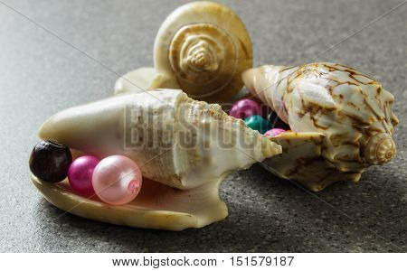 Sea Shells With Colored Beads On Gray Background