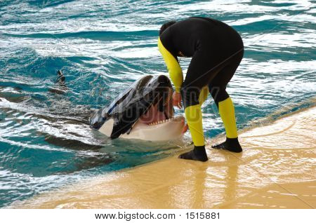 Man And Killer Whale