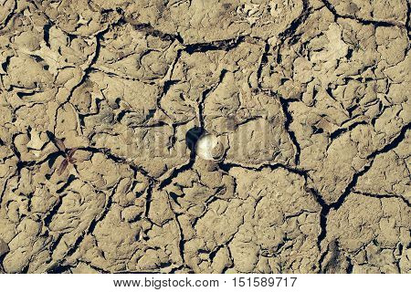 Dry soil with cracked waterless surface texture of grey earth on natural background with shell