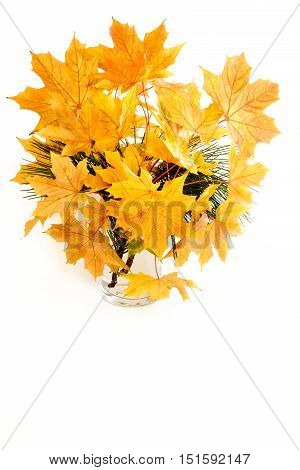 Glass vase filled with natural autumn chestnut leaves on small branches and pine tree branches. Isolated on white background with copy space.