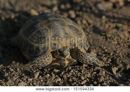Nature, animals, fauna, parareptilia, shell, Testudines, reptiles, turtle ground