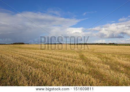 Golden Straw Stubble