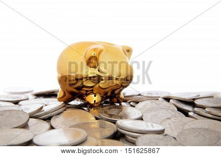 Golden piggy bank surrounded by coins on white background.