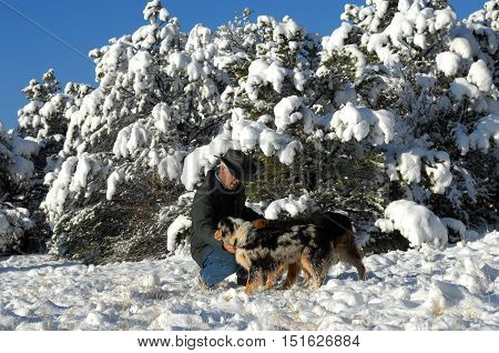 Australian Shepherds In The Snow