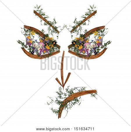 application face of dried pressing bright flowers and small delicate sweet peas yellow celandine multicolor royal Aquilegia Columbine flower long stiff brown iris leaves in the form of eye