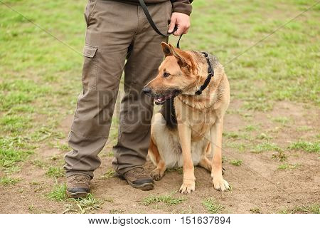 German Shepherd Dog With Owner